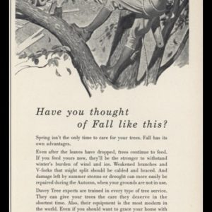 1953 Davey Tree Expert Co. Vintage Ad | Arborist Art